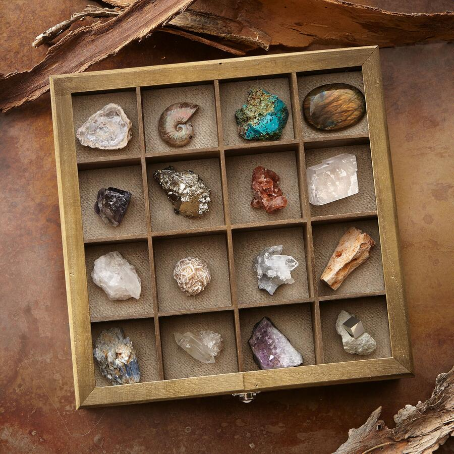 FOSSIL AND MINERAL COLLECTION