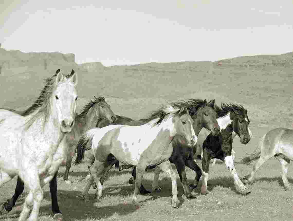 Sundance Wild Horses