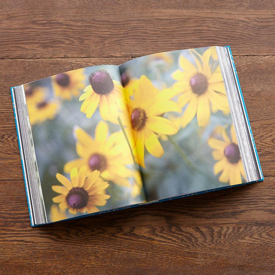 BEAUTY EVERY DAY BOOK