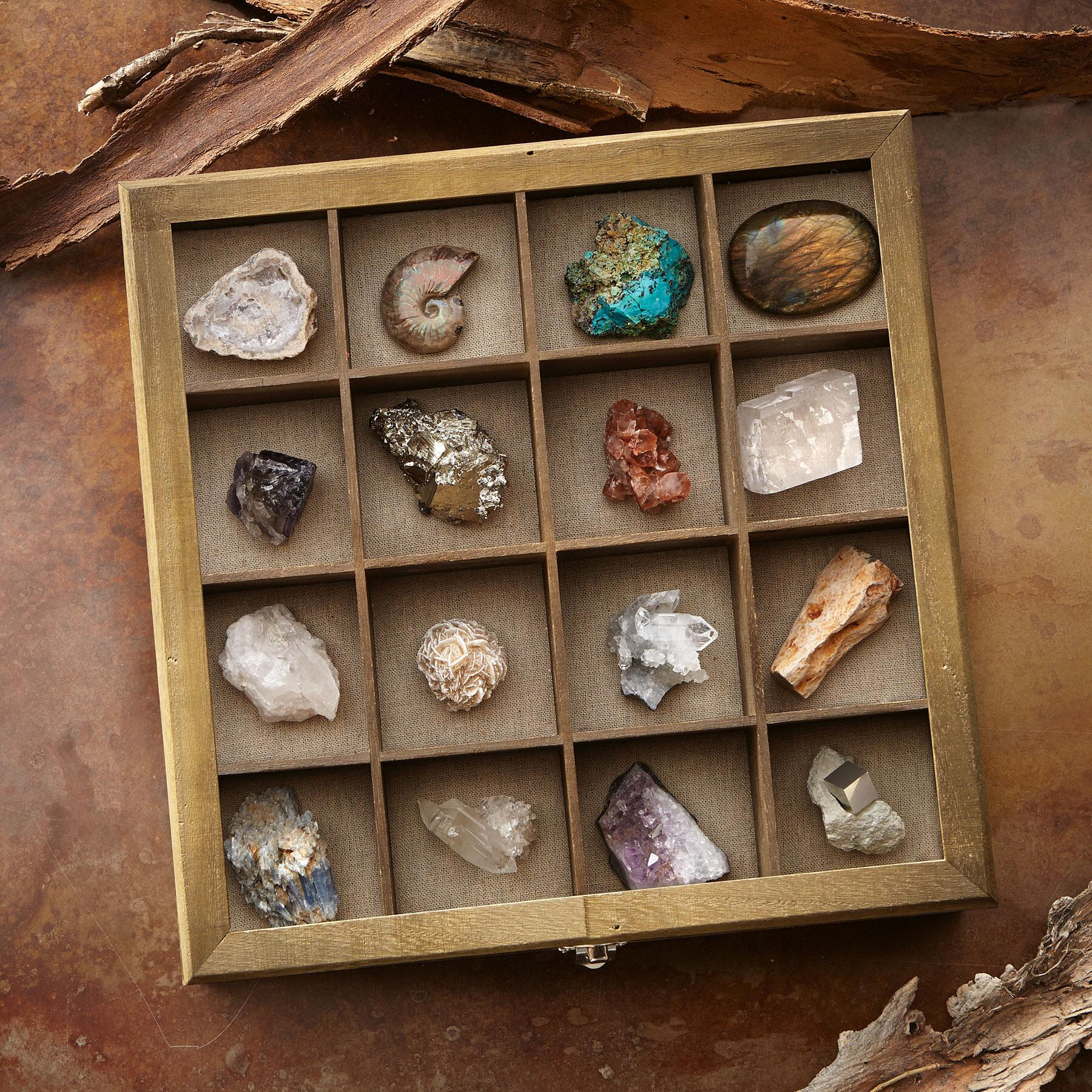 FOSSIL AND MINERAL COLLECTION: View 1