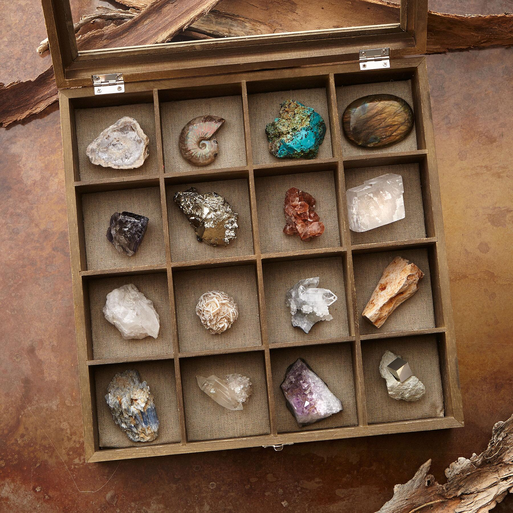 FOSSIL AND MINERAL COLLECTION: View 2