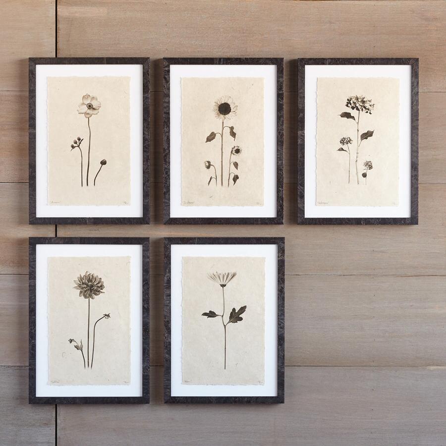 FLOWER STUDIES PRINT