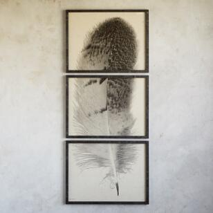FEATHER STUDIES TRIPTYCH PRINT, SET OF 3