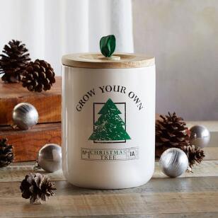 GROW YOUR OWN CHRISTMAS TREE