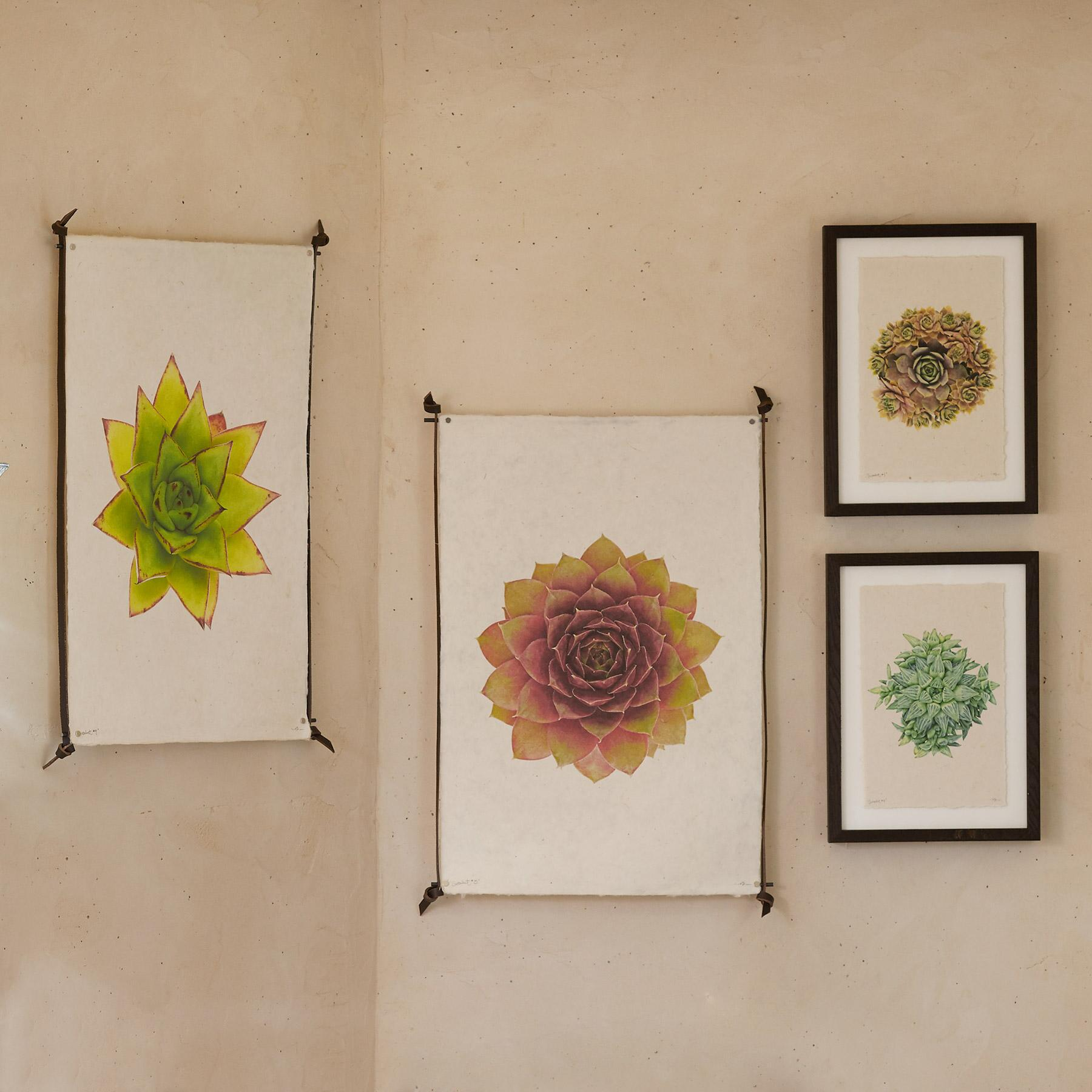 SUCCULENT STUDIES PRINTS: View 1