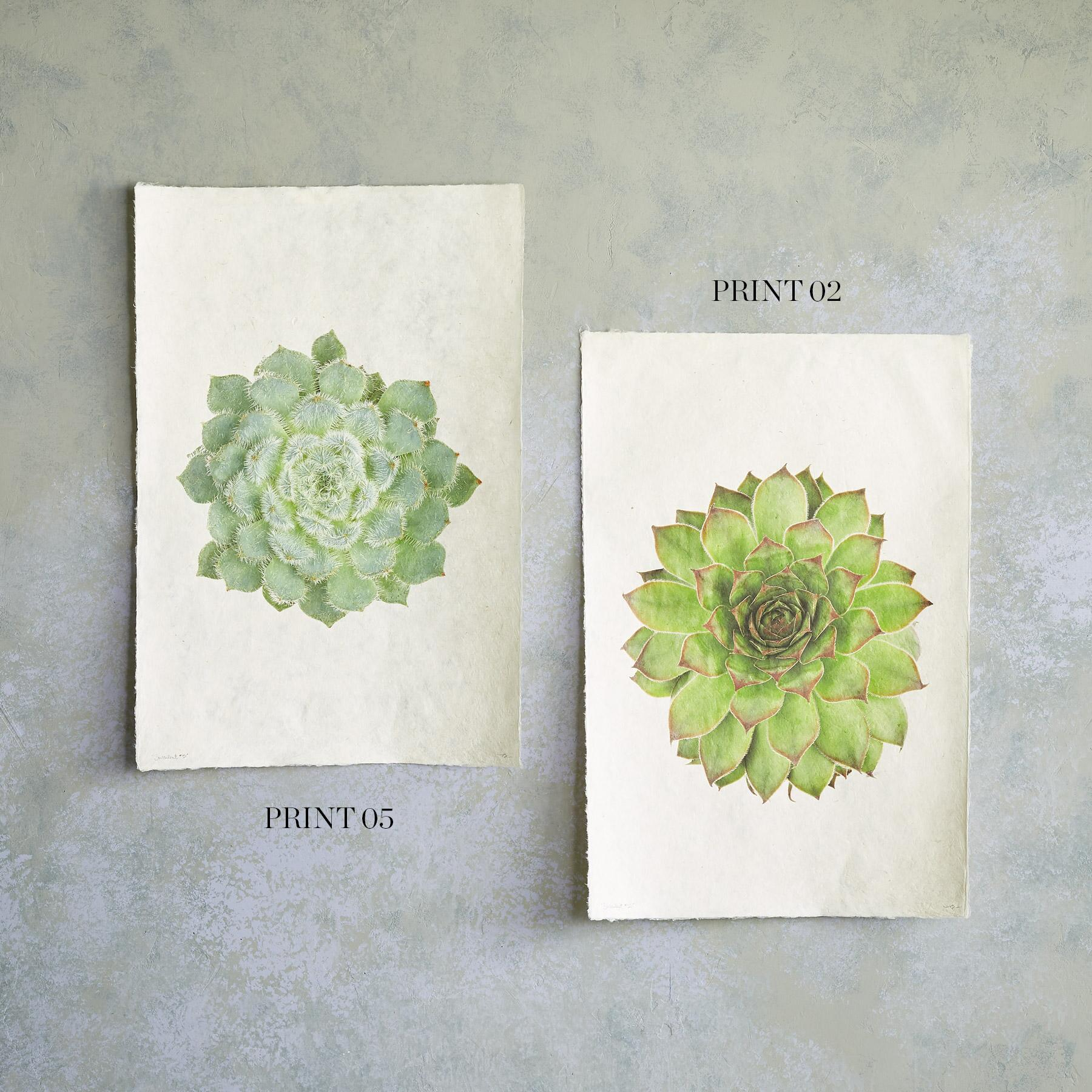 SUCCULENT STUDIES PRINTS: View 2