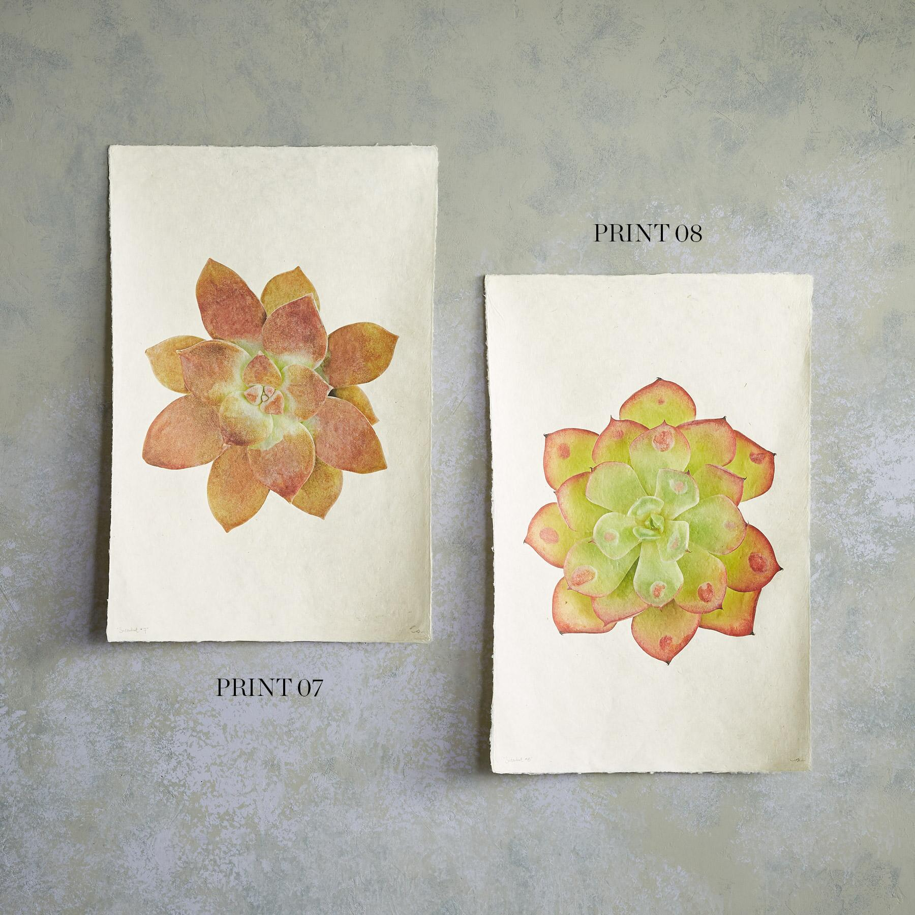 SUCCULENT STUDIES PRINTS: View 4