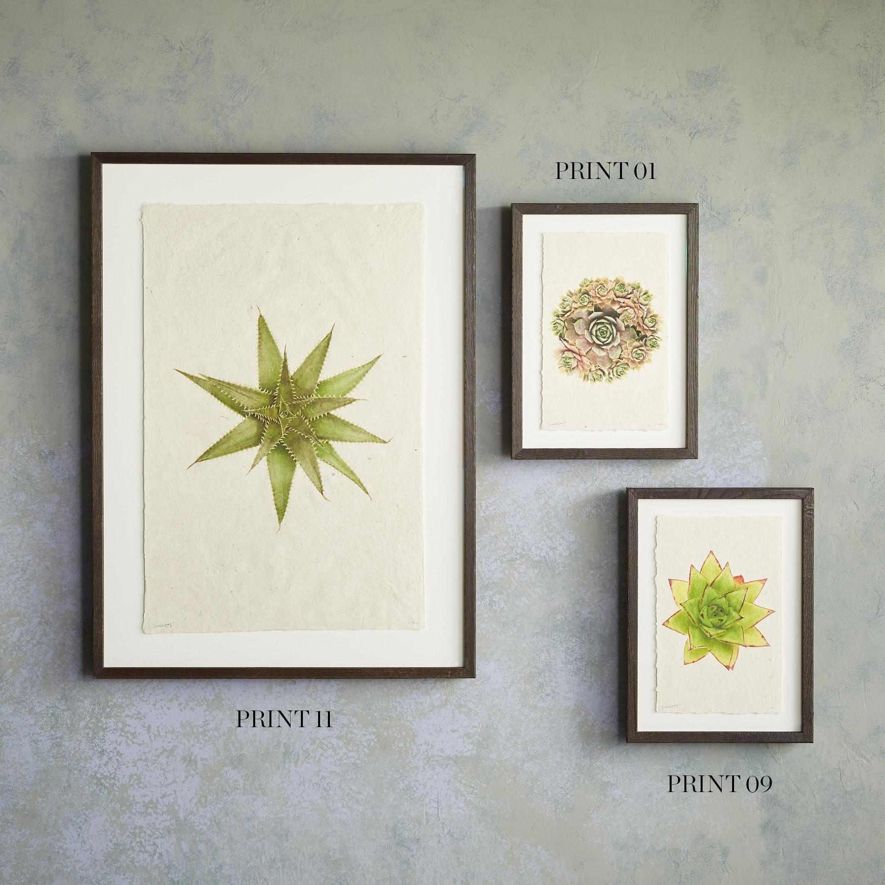 SUCCULENT STUDIES PRINTS: View 5