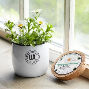 GROW YOUR OWN DAISY