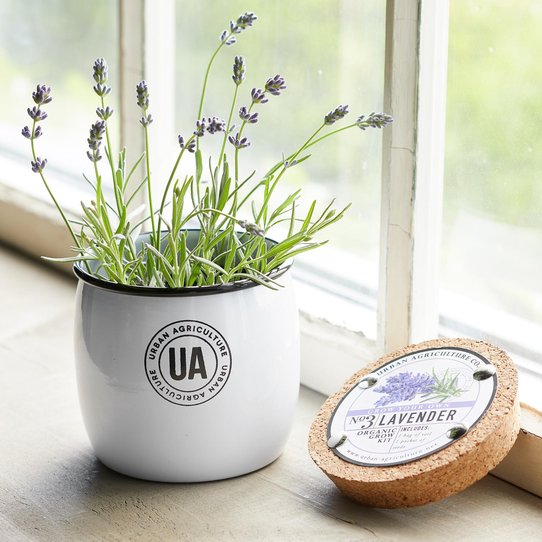 GROW YOUR OWN LAVENDER: View 1