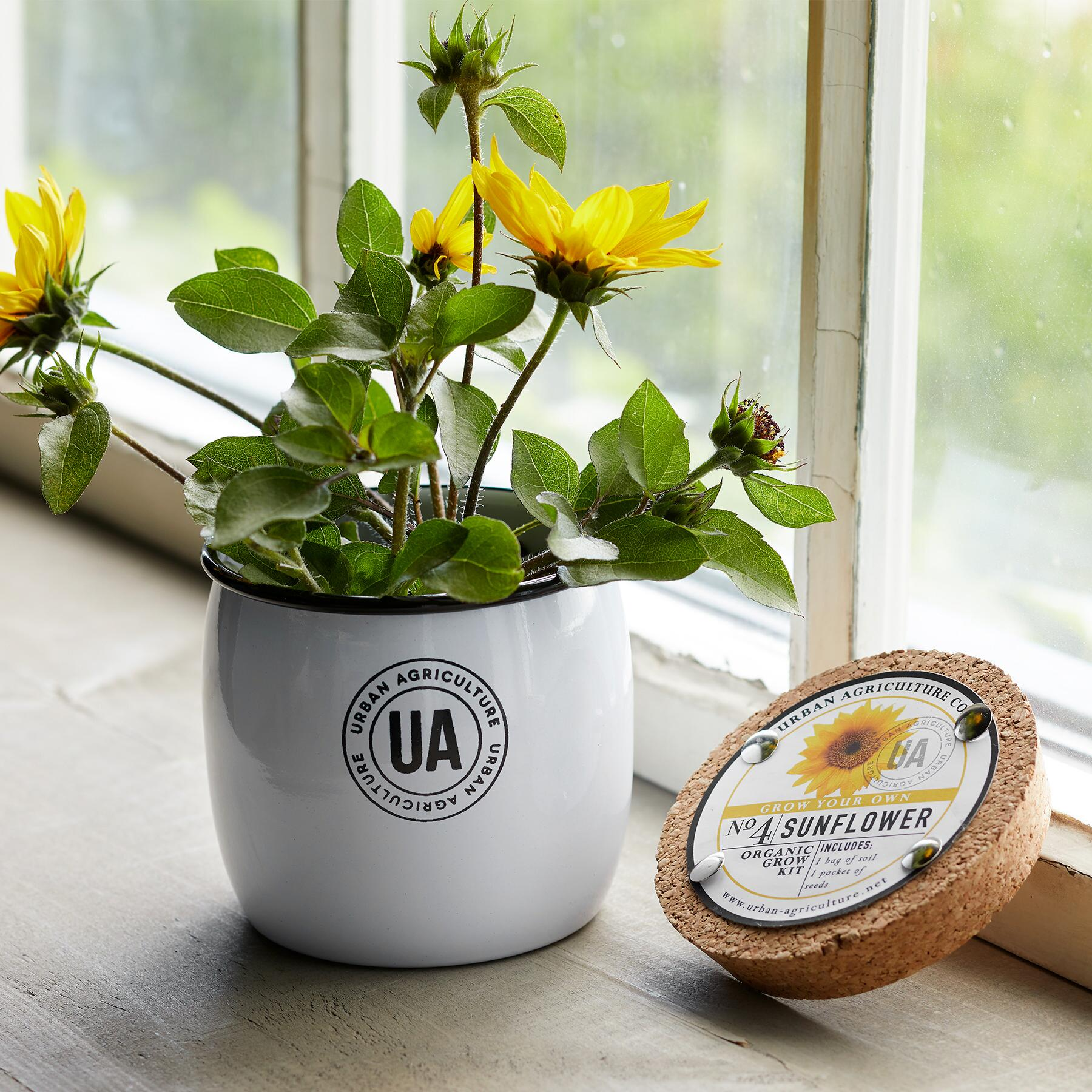 GROW YOUR OWN SUNFLOWER: View 1