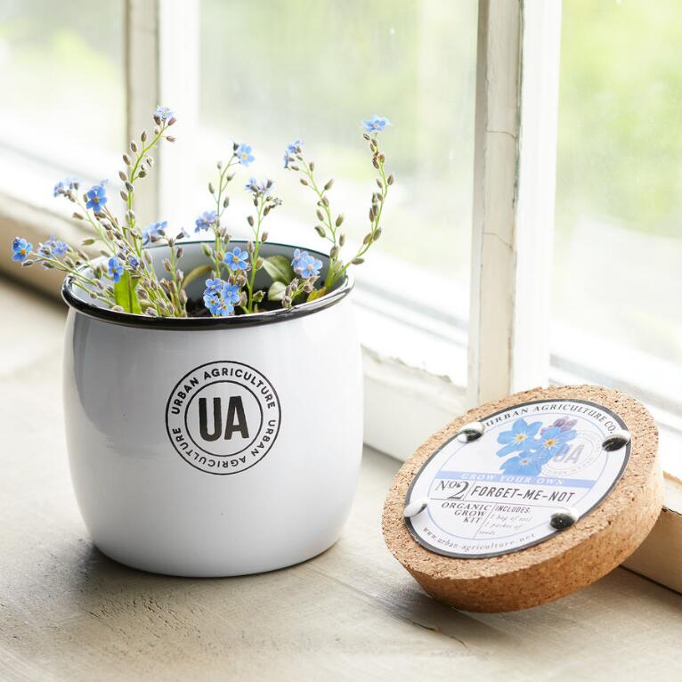 GROW YOUR OWN FORGET ME NOT